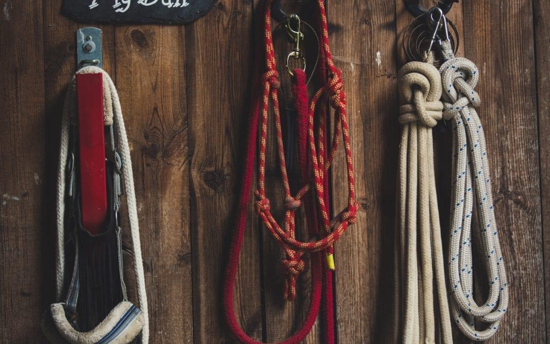 Du suchst eine Reitanlage, auf der Du entspannt mit Pferden arbeiten kannst?